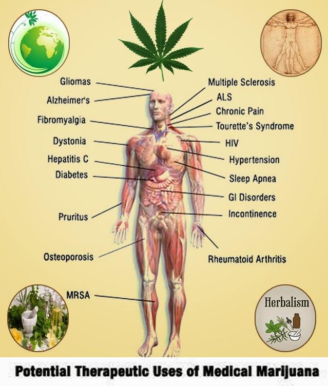usos terapeuticos marihuana medicinal